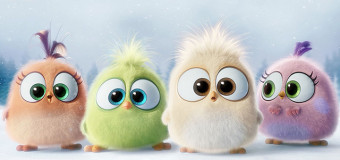 Meet The Adorable Hatchlings From 'The Angry Birds Movie'