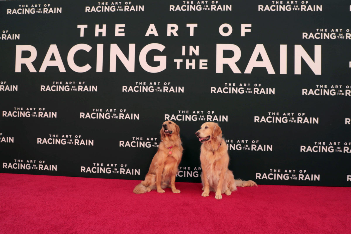 The Art Of Racing In The Rain: The Art Of Racing In The Rain World Premiere Photos